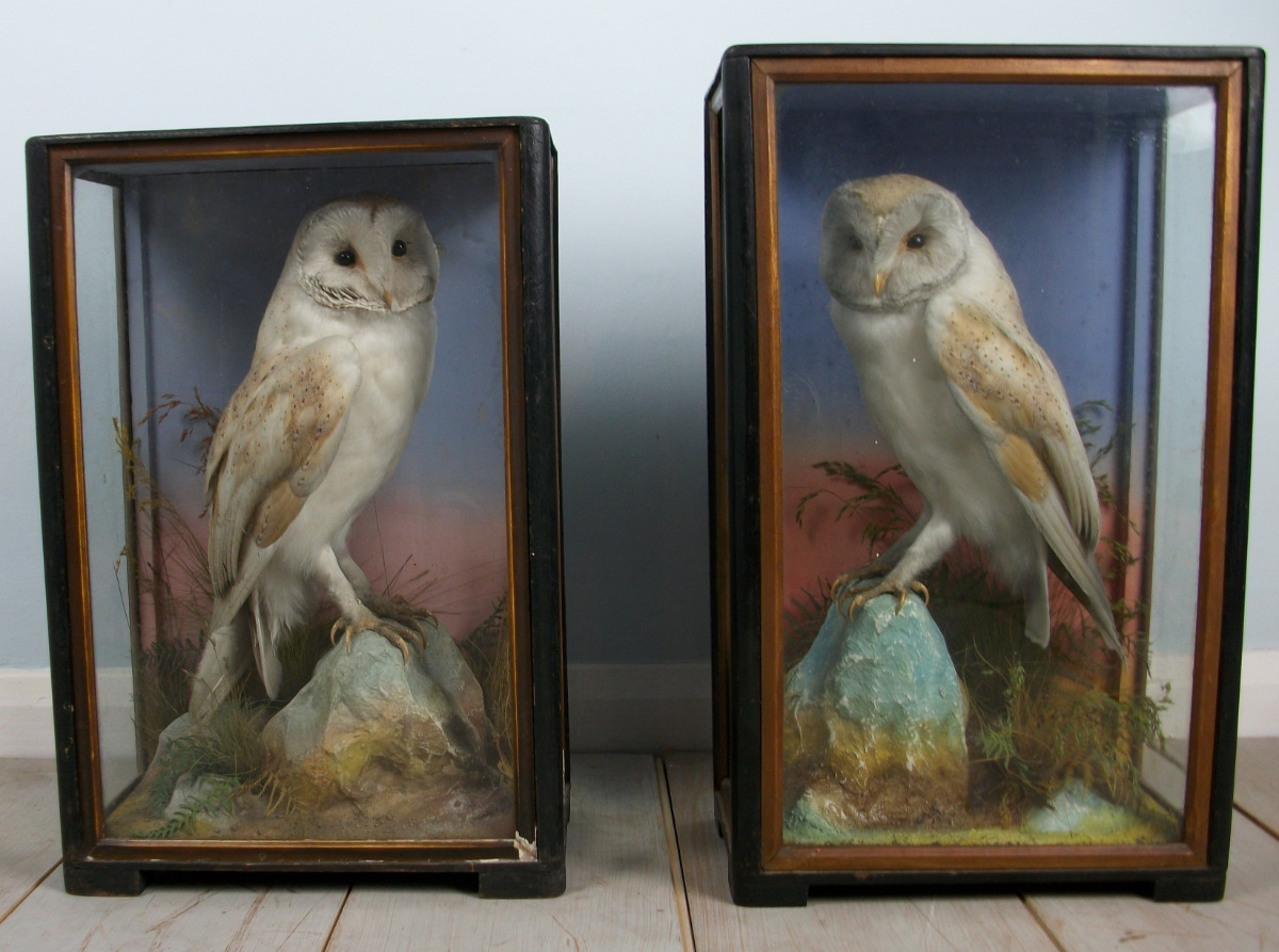 Victorian antique taxidermy by James Hutchings of Aberystwyth, Wales (3).JPG