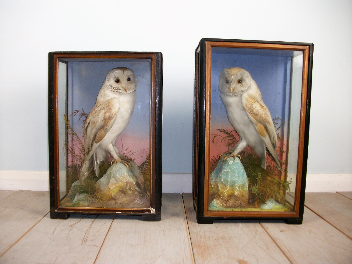 Victorian antique taxidermy by James Hutchings of Aberystwyth, Wales (4).JPG