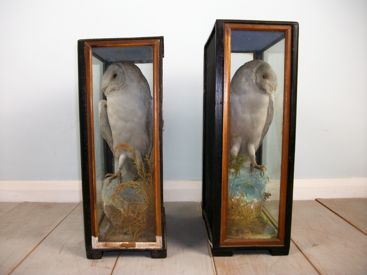 Victorian antique taxidermy by James Hutchings of Aberystwyth, Wales (5).JPG