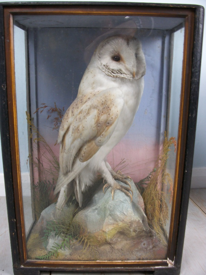 Victorian antique taxidermy by James Hutchings of Aberystwyth, Wales (8).JPG
