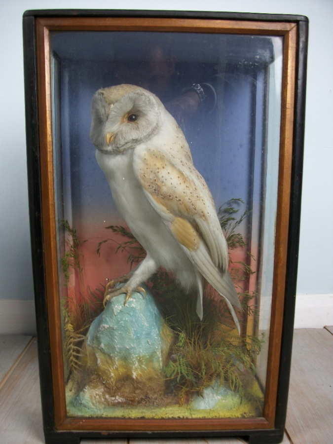 Victorian antique taxidermy by James Hutchings of Aberystwyth, Wales (9).JPG