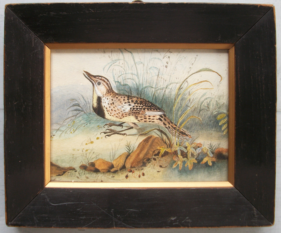 Antique Watercolour of a Lark