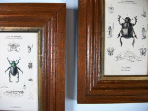 Pair of Beetles Prints in Moulded Oak Frame