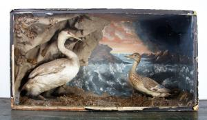 taxidermy  diorama of two birds